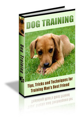 Product picture 90 DOG TRAINING TIPS